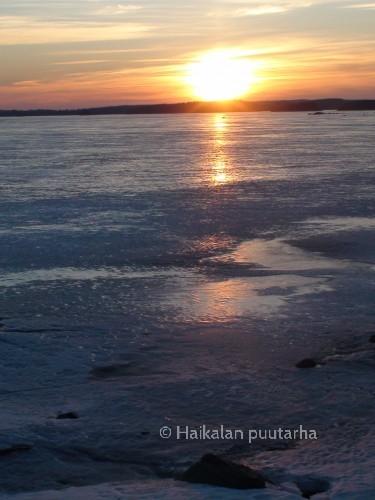 Maaliskuun ilta-auringossa Pyhäjärven jää heijastaa valoa. Vesi on alhaalla ja isojen rantakivien reunuksilla jää on noussut harjuiksi.