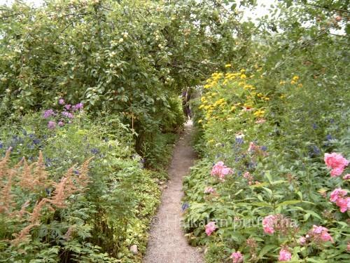 Perennapenkit reunustavat hiekkakäytäviä Ainolan puutarhassa. Vierailuajankohtamme oli elokuussa, monet syksyn kukat olivat jo vähän lopuillaan.